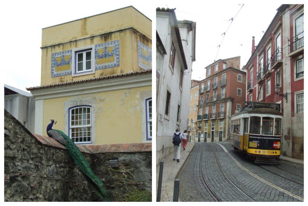 Lizbona Portugalia ulica paw tramwaj