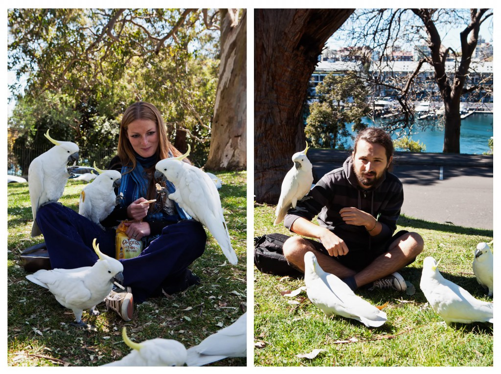 kakadu Sydney przedeptane Australia