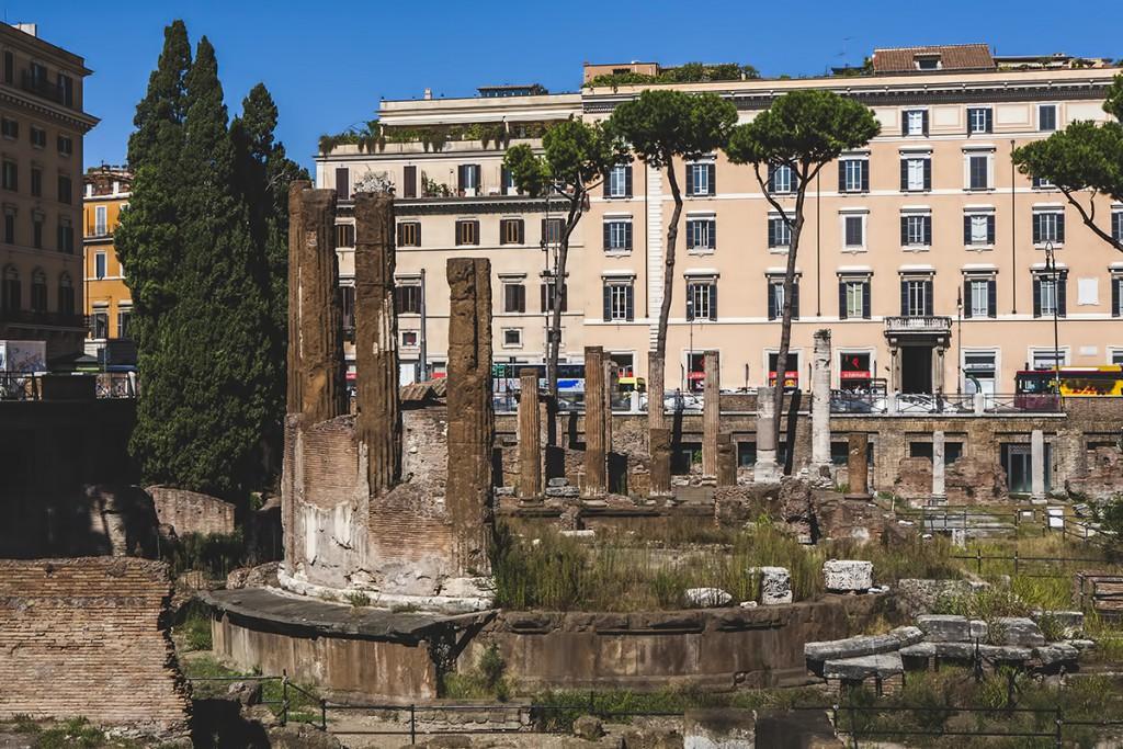 Largo di Torre Argentina, Rzym, koty