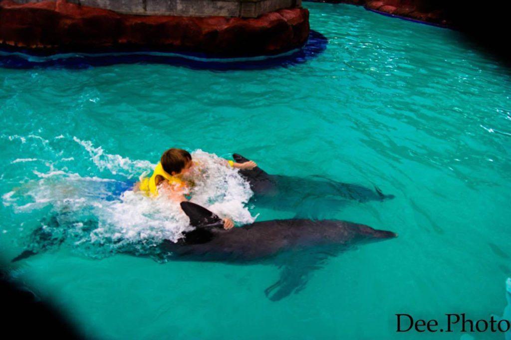 delfiny na Bali
