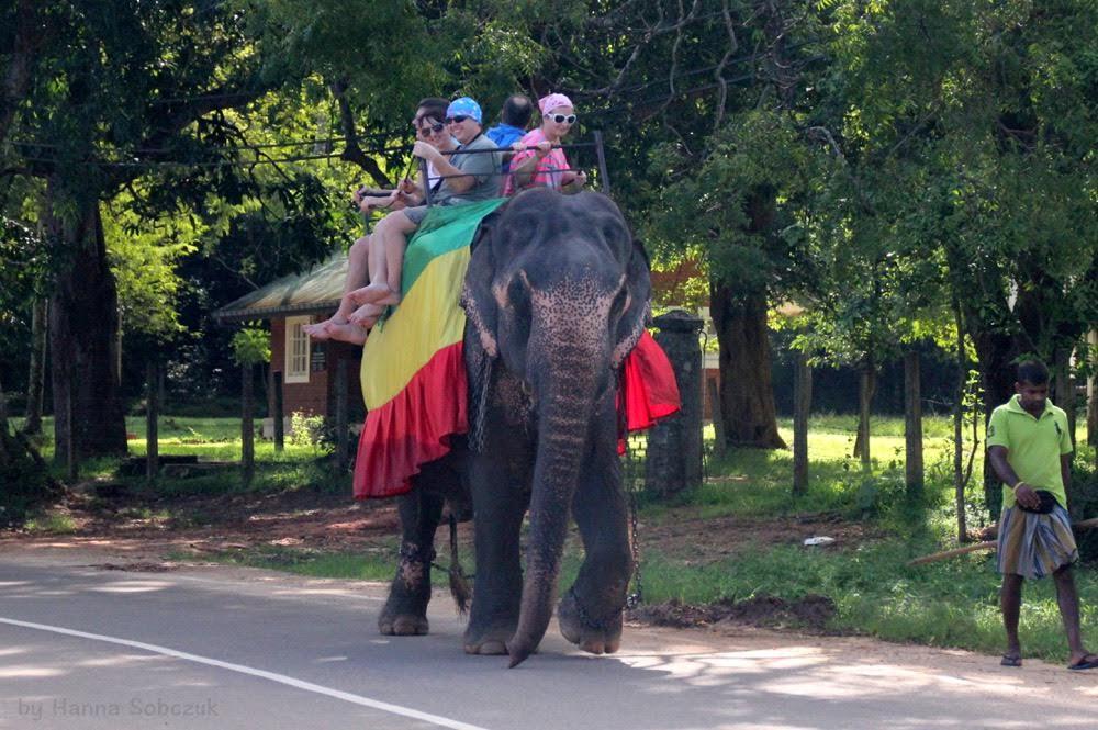 słonie, Sri Lanka, Azja