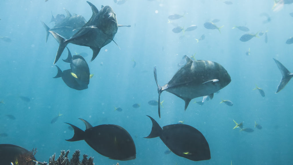rafa koralowa, nurkowanie, Cairns