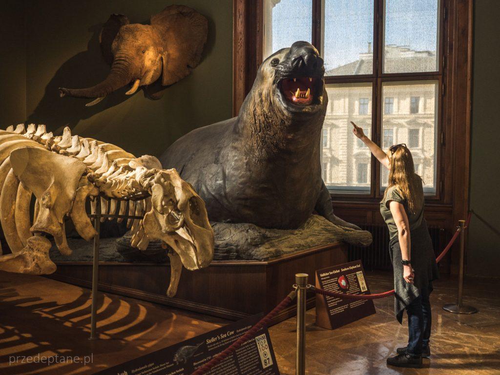 Muzeum Historii Naturalnej w Wiedniu, Austria