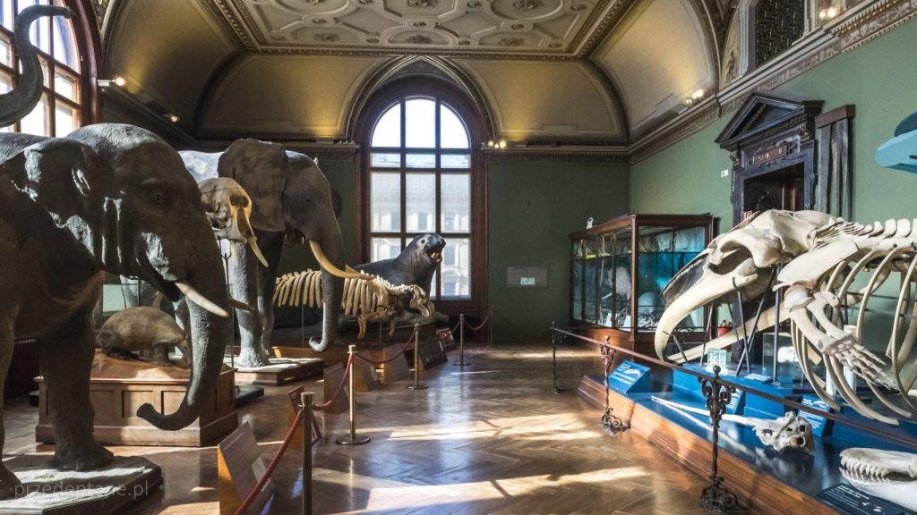 Muzeum Historii Naturalnej, Wiedeń, ssaki