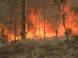 Australia pożary busz